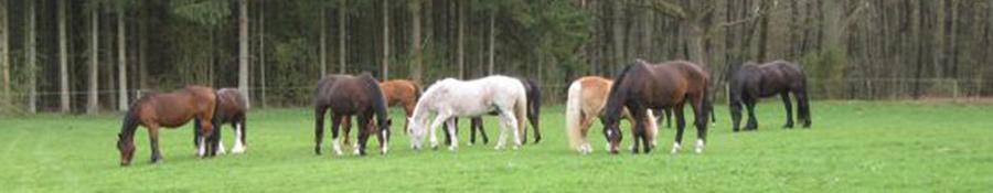 Jobenshof Pferde
